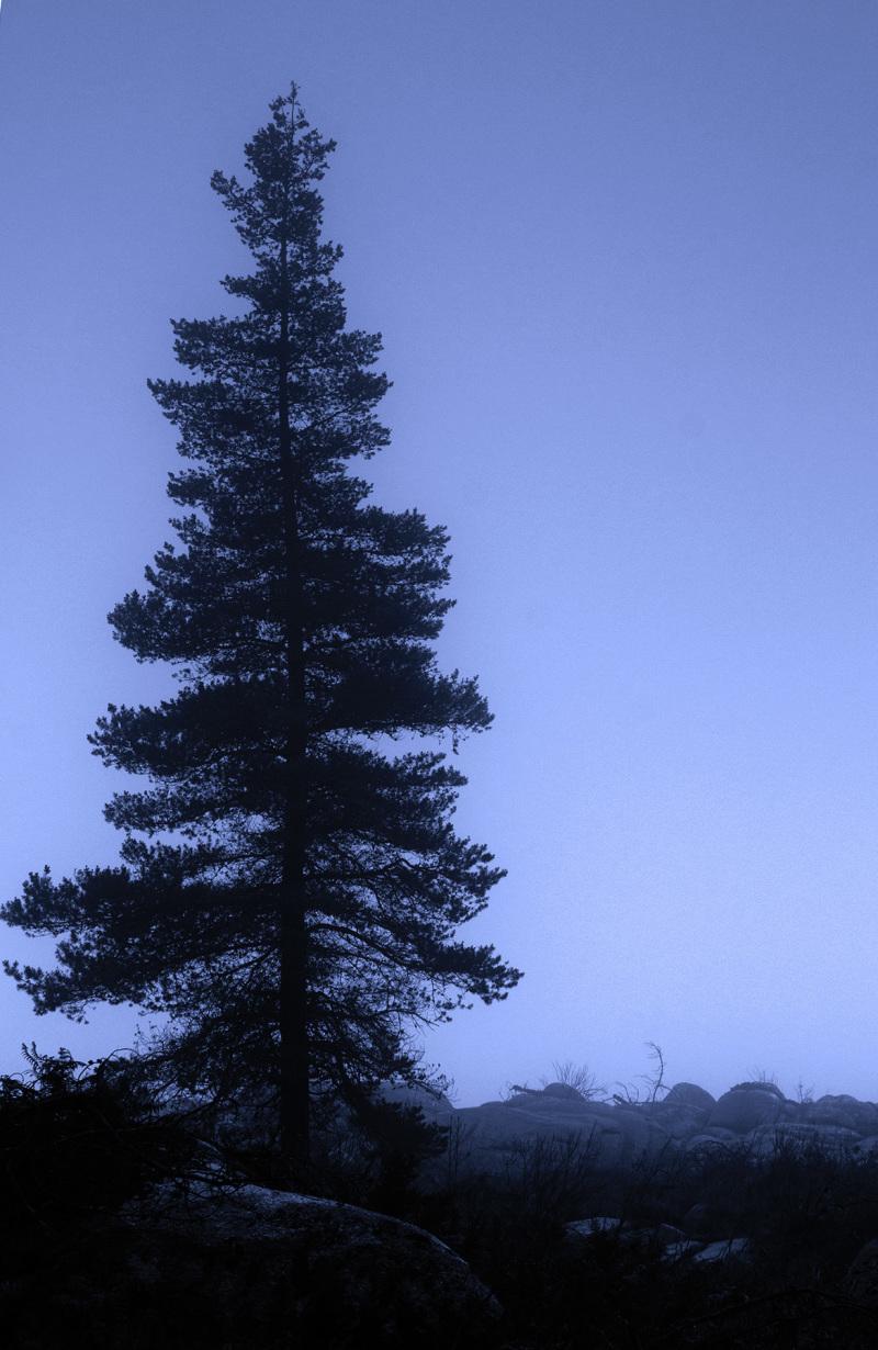 alvão nevoeiro outono arvore