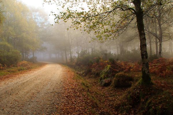 alvão nevoeiro outono sunrise caminho