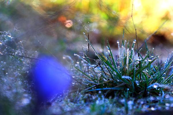 alvão gotas outono orvalho açafrão