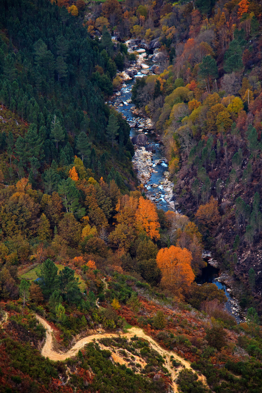 peneda-gerês rio outono caminho