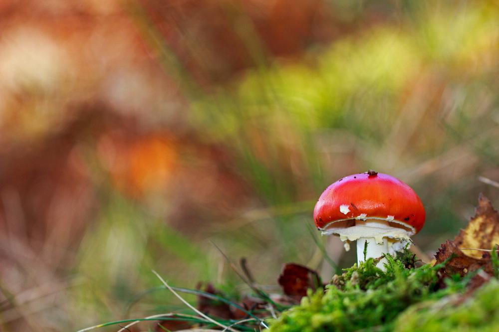alvão  outono cogumelo