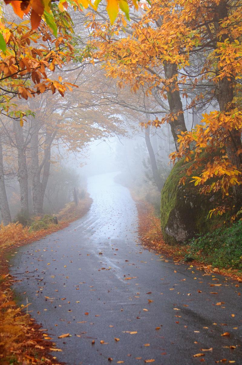 serraestrela outono nevoeiro manteigas caminho