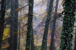 Enchanted florest