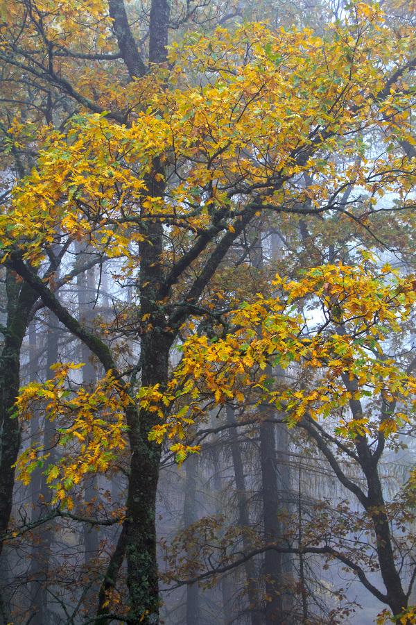 serraestrela outono nevoeiro manteigas carvalho