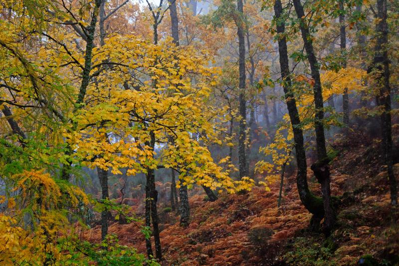 serraestrela outono nevoeiro manteigas