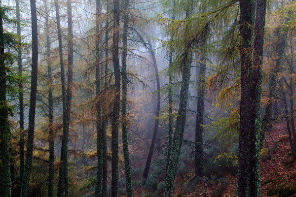 serraestrela outono nevoeiro manteigas pinheiro