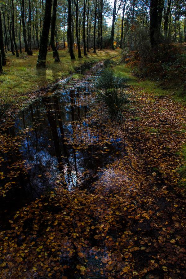 caramulo outono penoita reflexo caminho
