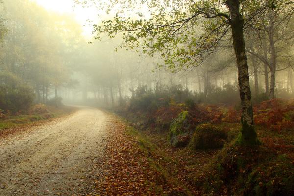 alvão nevoeiro outono caminho