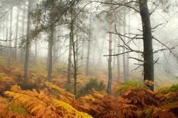 alvão nevoeiro outono arvore pinheiro