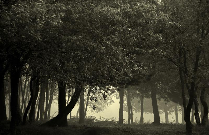 """""""Osgiliath Wood"""""""