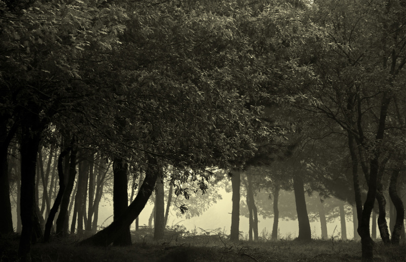 lousã outono nevoeiro arvore