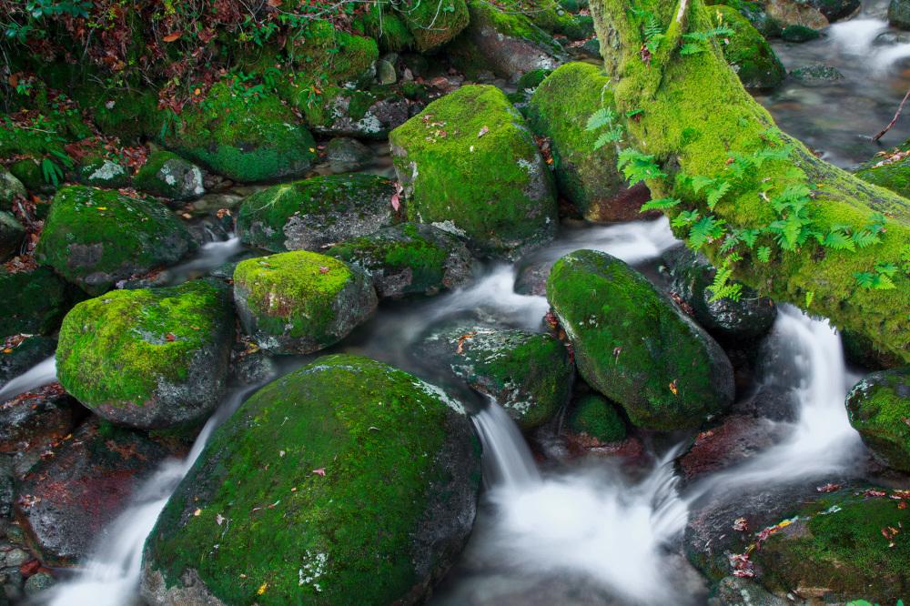 peneda-gerês mata-da-albergaria outono rio