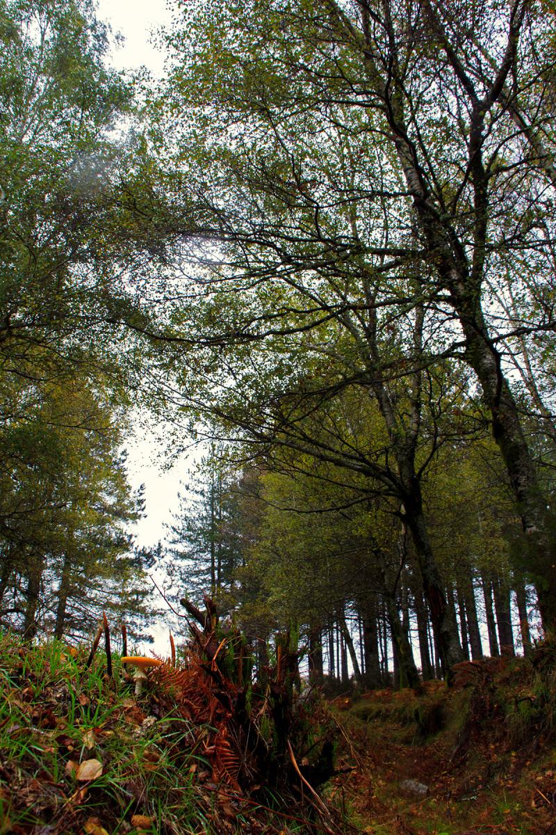 alvão  outono cogumelo nevoeiro