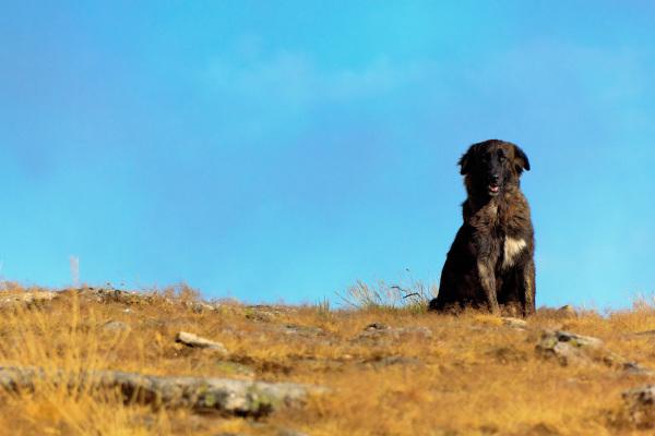 serraestrela vale-da-loriga montanha  cão