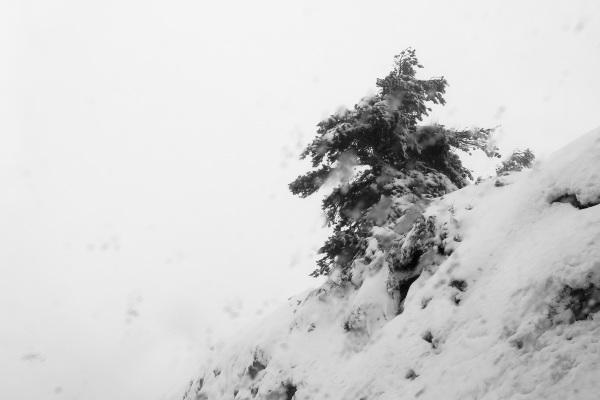 serraestrela inverno neve arvore