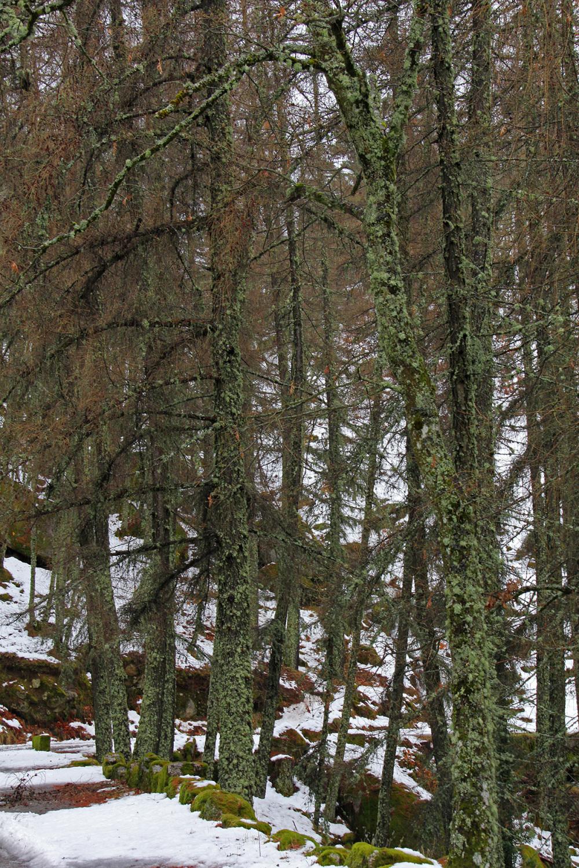 serraestrela inverno neve arvore manteigas
