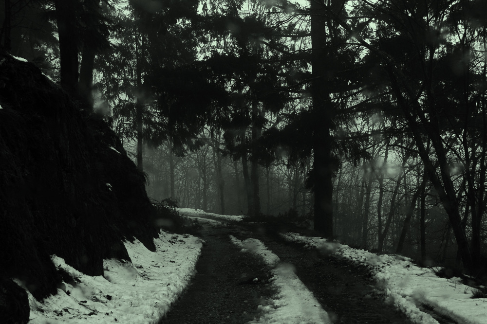 serraestrela inverno neve arvore pinheiro caminho