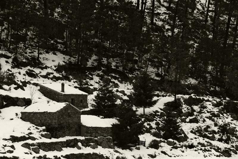 serraestrela inverno neve arvore pinheiro aldeia