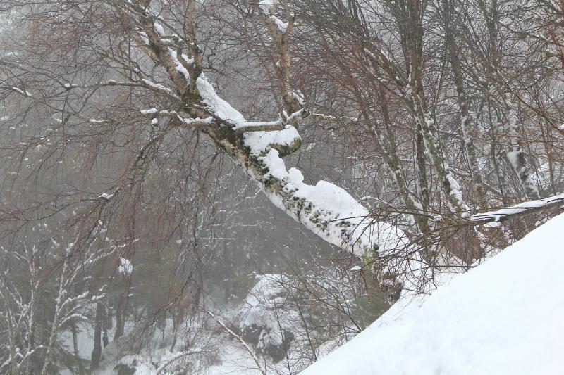 serraestrela inverno neve arvore nevoeiro