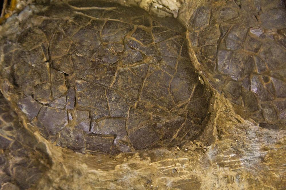 praia  lourinhã fossil rocha ovo