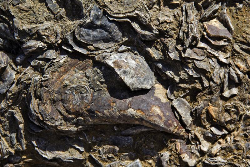 praia lourinhã fossil rocha paimogo