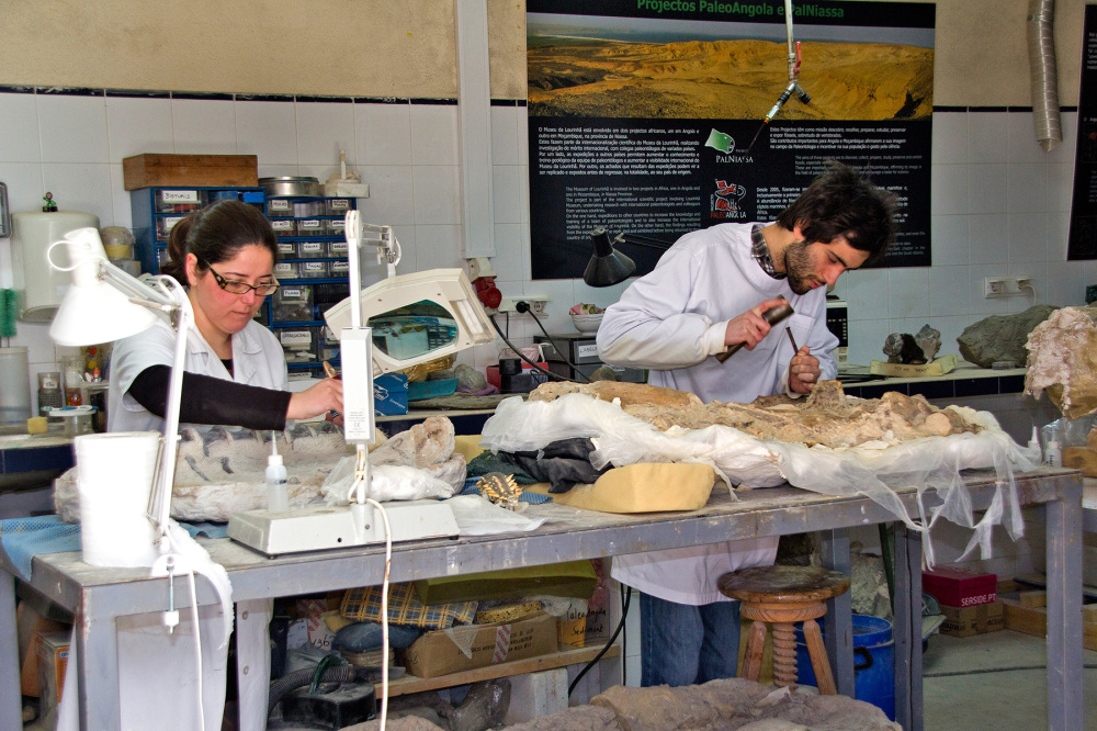museu lourinhã fóssil