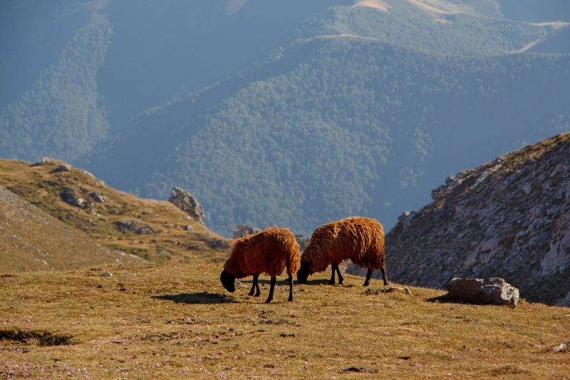 picos-da-europa fuente-dé espanha montanha ovelha