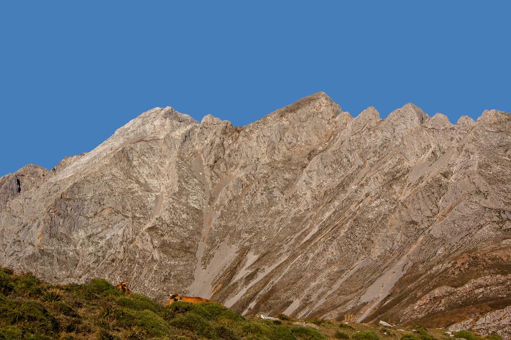 picos-da-europa fuente-dé espanha montanha vaca