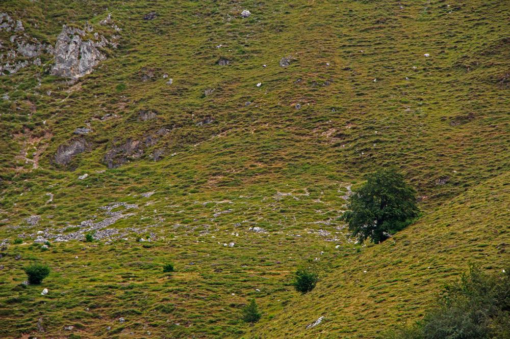 picos-da-europa fuente-dé espanha montanha árvore