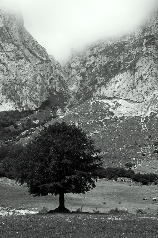 picos-da-europa fuente-dé espanha montanha arvore