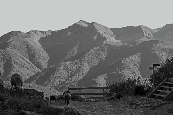 picos-da-europa fuente-dé espanha montanha ovelhas