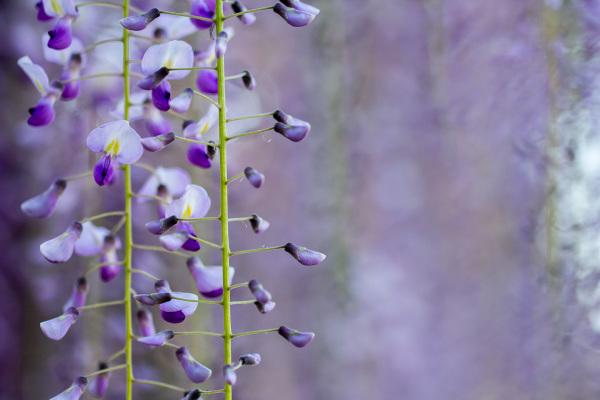 arvore flor