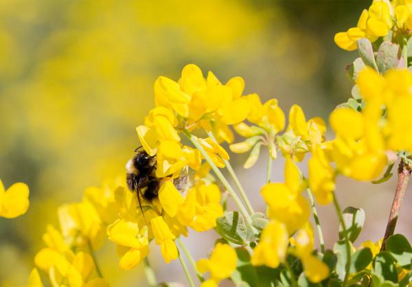 pnsac flor abelha primavera