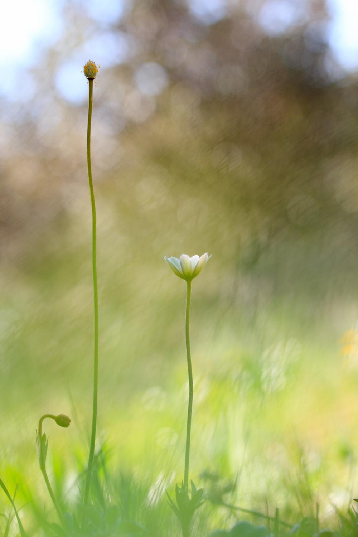pnsac flor