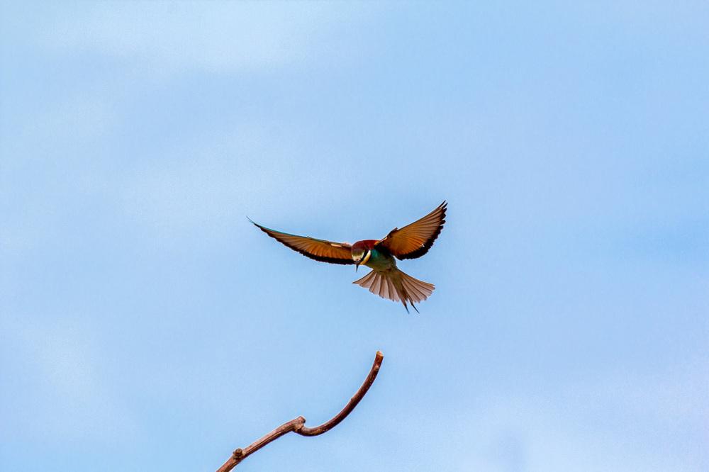 abelharuco ave