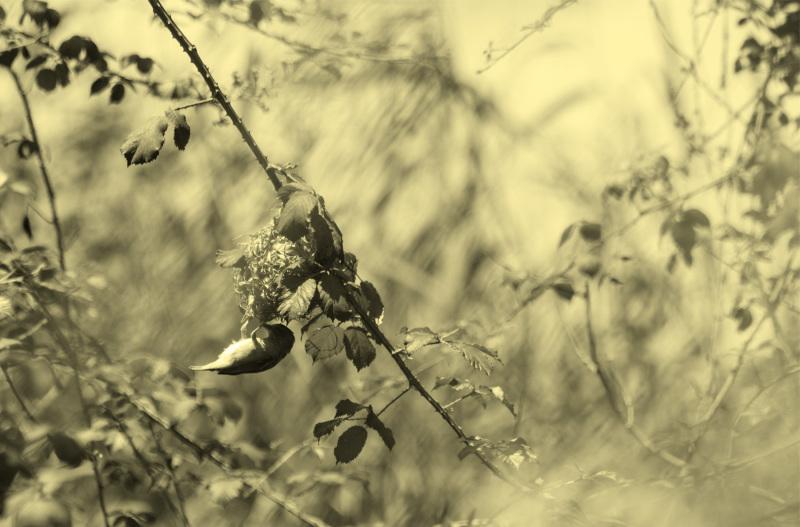 ave tecelão
