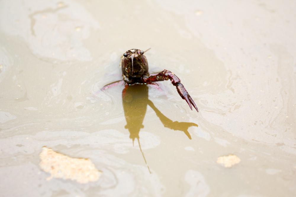 lagostim lagoa-de-óbidos obidos