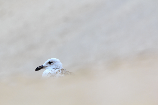 praia vieira gaivota