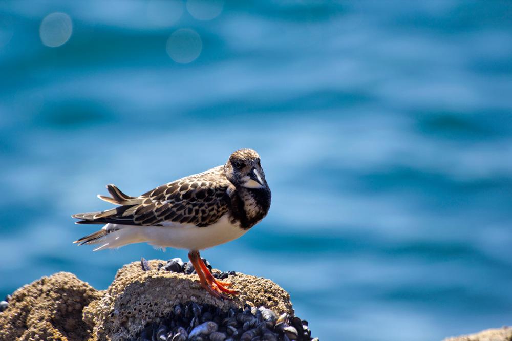 praia cascais mar rola ave