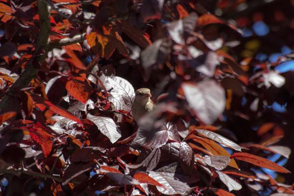 espanha pardal bilbao ave