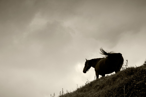 santillana-del-mar cantabria espanha cavalo