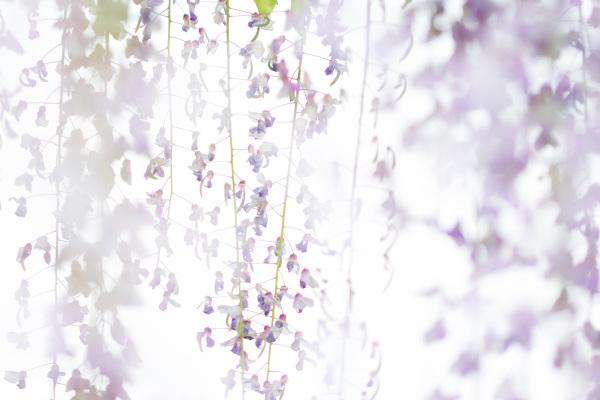 flor pnsac árvore