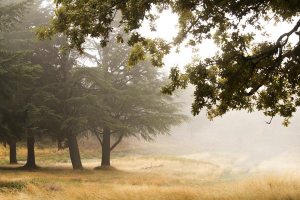 lousã santoantóniodaneve outono arvore nevoeiro