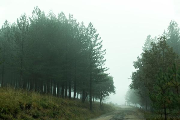 lousã outono pinheiro nevoeiro caminho