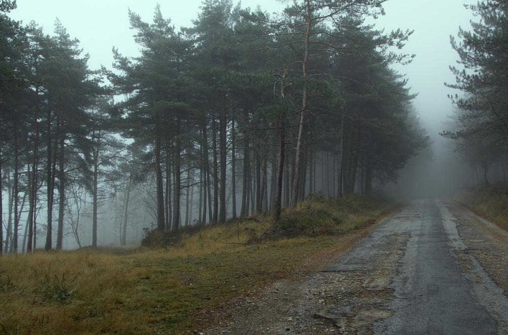 lousã outono nevoeiro caminho pinheiro
