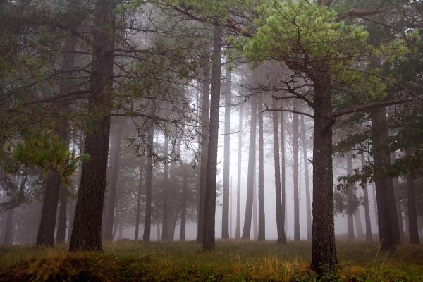 lousã  outono nevoeiro pinheiro