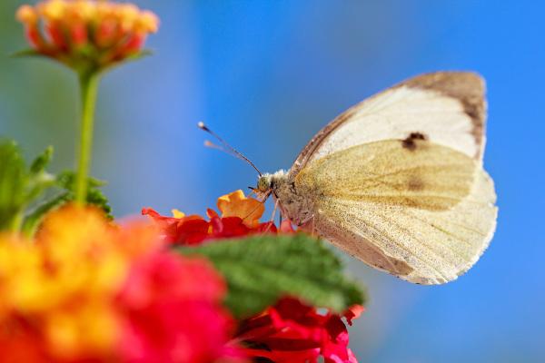 leiria borboleta outono