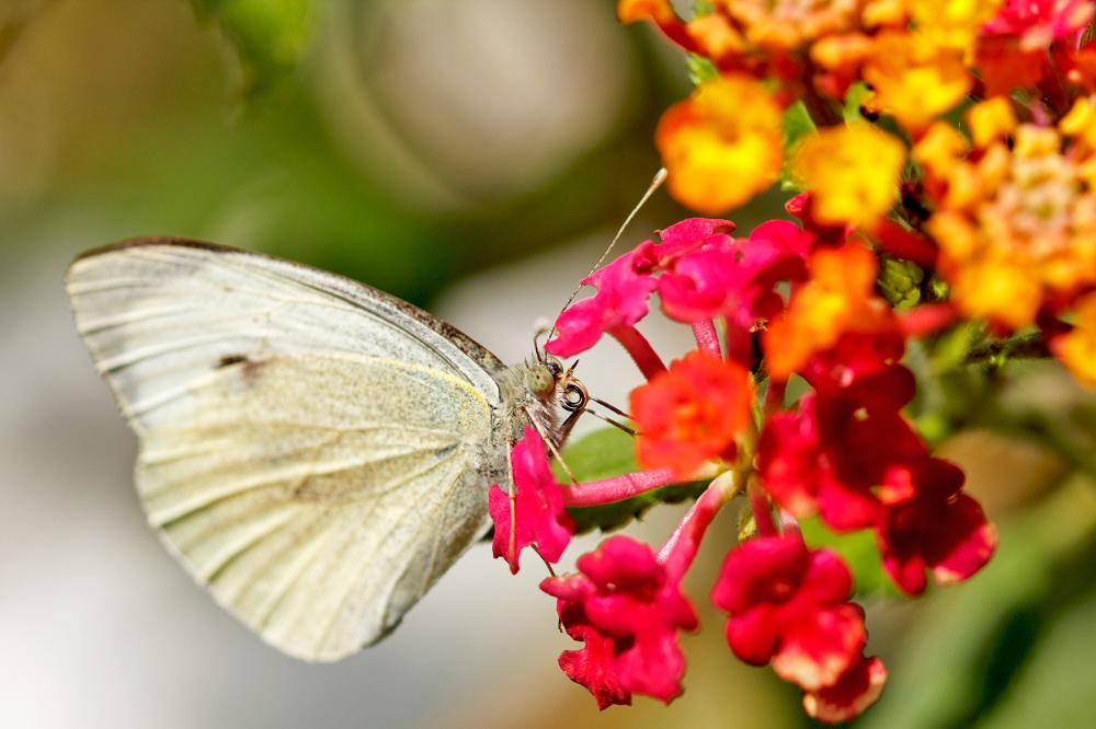 borboleta leiria