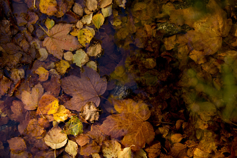 alvão outono folhas