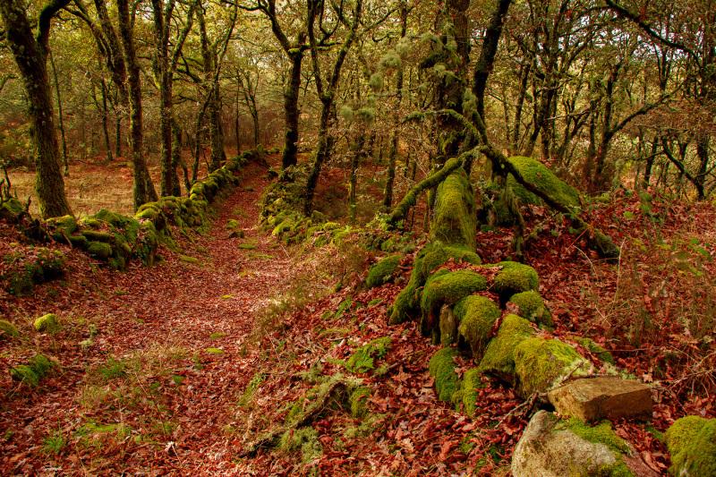 caramulo caminho outono